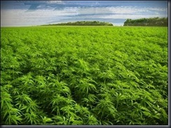 PlantTheLand