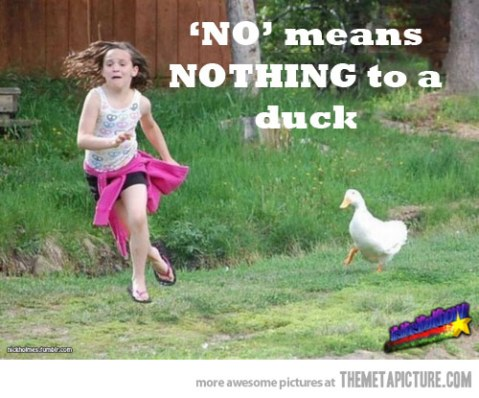 funny-duck-chasing-little-girl