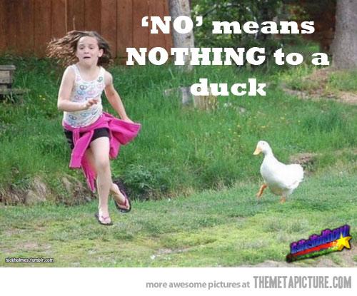 funny-duck-chasing-little-girl